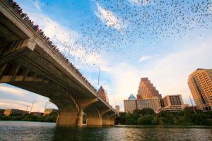Bat Viewing at The Congress Avenue Bridge