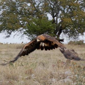 Last Chance Forever, the Bird of Prey Conservancy - Educational Program