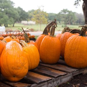 10/19 and 10/26 Pumpkin Play  - Spring Creek Gardens